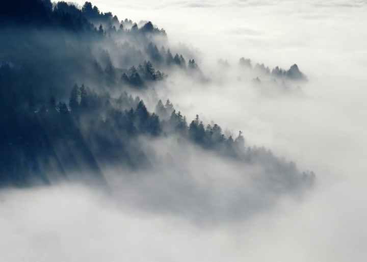 forest-fog-nature-winter-45222.jpeg