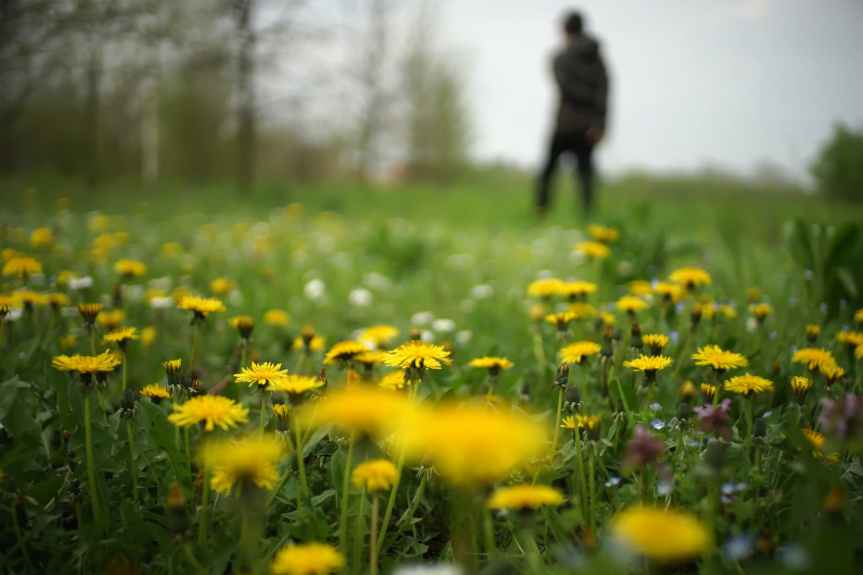 shallow focus yellow daisies